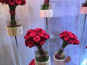 Trandafiri rhodos
