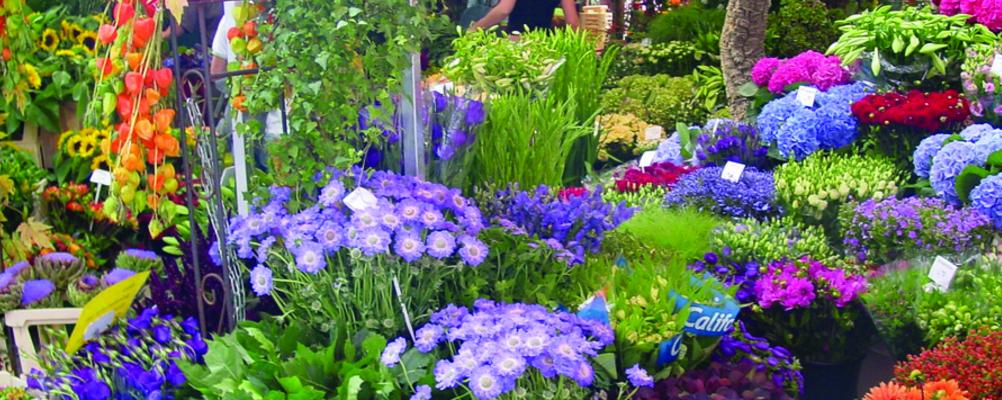 Industria de flori – cifre exporturi 2015