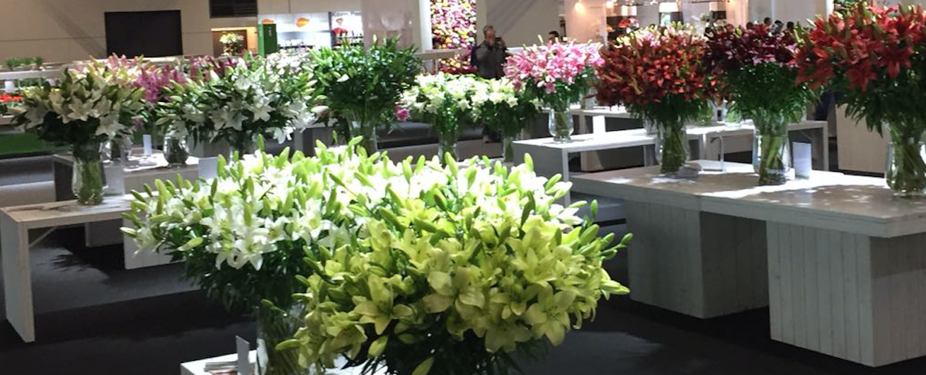 Targ de floristica: ChristmasWorld2017 / FloraDecora