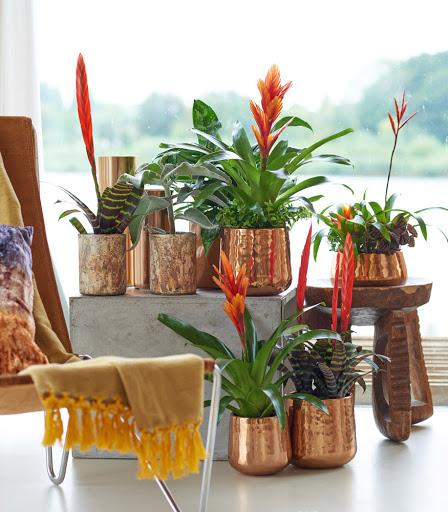 Bromelia – planta exotica usor de ingrijit #staiacasa