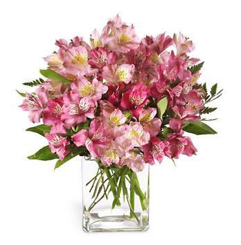 Flori pentru zodii, Buchet de 55 alstroemeria roz