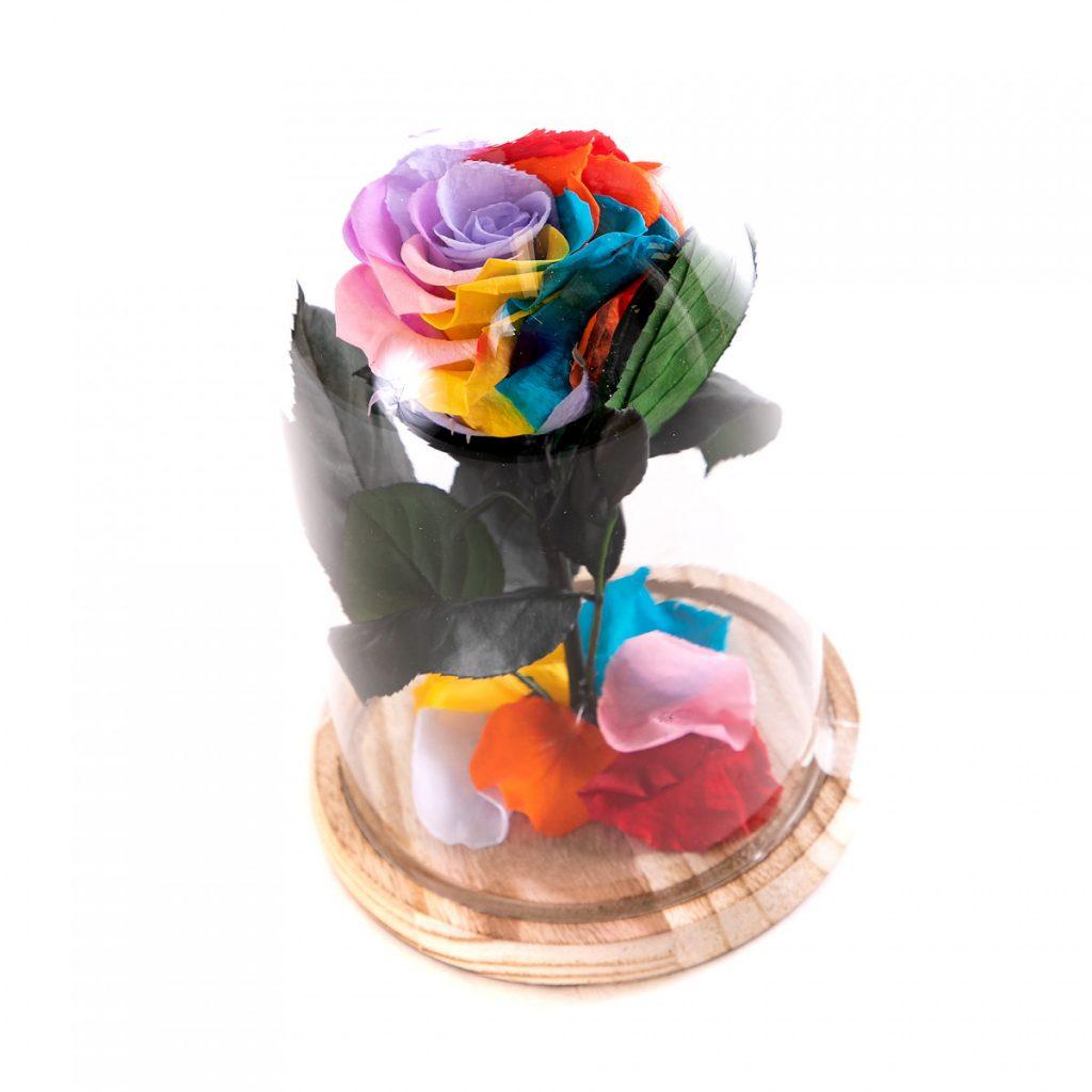 Trandafir criogenat multicolor curcubeu, doar 199,99 RON!
