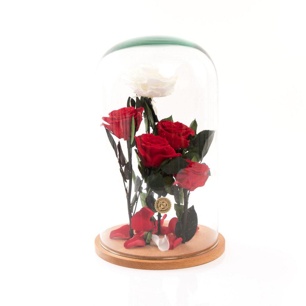 Trandafiri criogenati Garden of Eden, doar 579,99 RON!