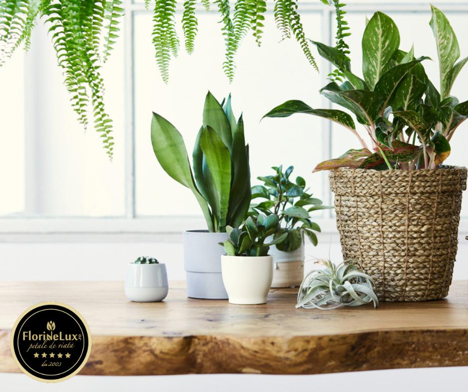 5 Plante care produc cel mai mult oxigen